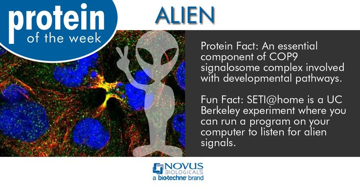 Protein of the Week: ALIEN Fact about the protein: An essential component of COP9 signalosome complex involved with developmental pathways.   Fun fact about aliens: SETI@home is a UC Berkeley experiment where you can run a program on your computer to listen for alien signals. #antibodies