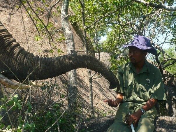 feeding time with the camp elephants