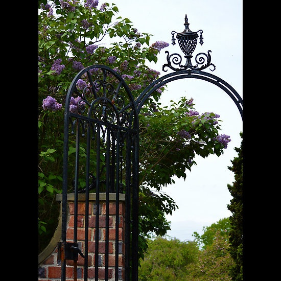 Planting Fields Arboretum State Historic Park Vintage Wrought Iron Gate Detail - Upper Brookville, New York  #plantingfields #arboretum #upperbrookville #newyork #historicpark #coehall #housemuseum #oysterbay #williamrobertson #marymaihuttleston #greenhouse #garden #woodland #guylowell #herbarium #matinecock #indians #nativeamericans #sophiesmith #work #goldcoast #bench #vintage #wroughtiron #estategatedetail #lilac #tree #red #brickwall
