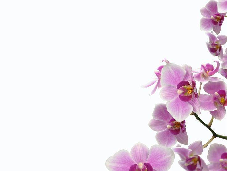 13 best Printable Backgrounds images on Pinterest   Backdrops ...