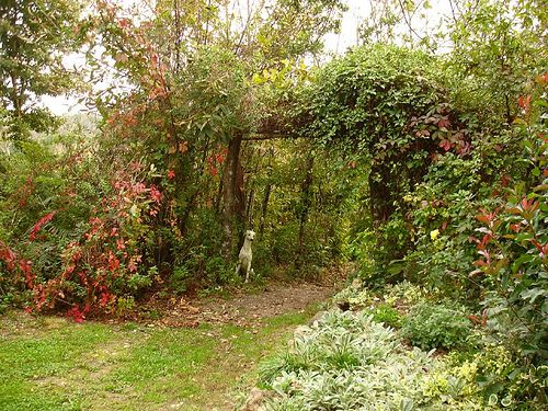 258 best Permaculture images on Pinterest Permaculture Organic