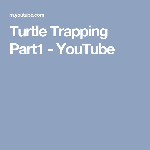 Turtle Trapping Part1 - YouTube
