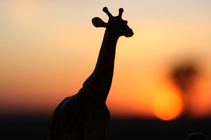 Abby's Giraffe