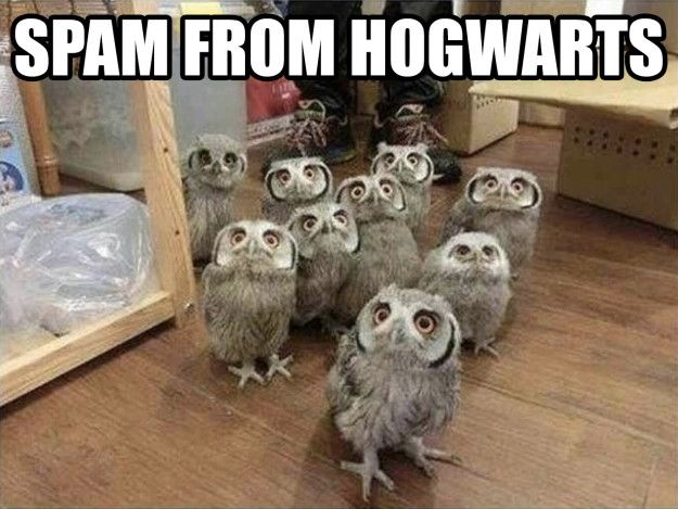 This bulk mail: | 17 Harry Potter Memes That Are So Dumb They're Great