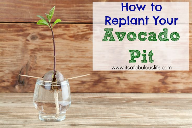 how to make golem replant