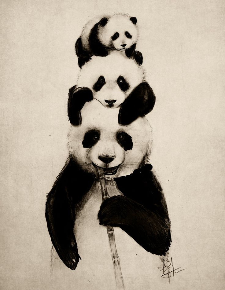 Pand-erations by IsaiahStephens #AnimalArt #Panda #art