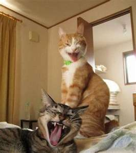 Hammin it up for the camera: Laughing Cat, Xd Cats, Cat Humor, Camera, Funny Stuff, Funny Photo, Dogs Funny