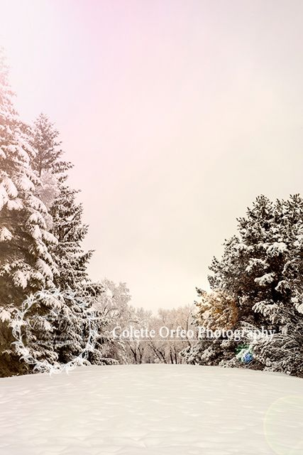 Winter Wonderland Photography Backdrop. Perfect for your Snow Princess or Prince, this Winter Wonderland was taken in Tottenham, ON. Features crisp white snow and evergreen trees. To order backdrop visit www.backdropscanada.ca