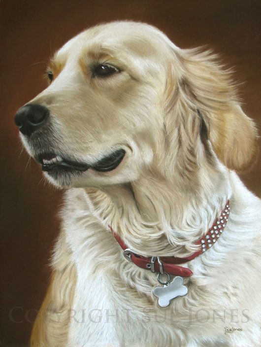 Golden Retriever..Why do I let hubs or kids pick out animals when really we all know they are all mine. I am their caretaker, their buddy, and their owner...next pet my favorite breed of all time- Golden Retriever!!