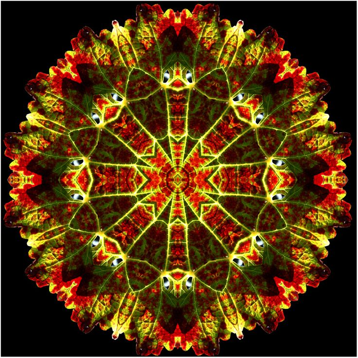 "When you look closer, you see this is a kaleidosopic image of a ""vine leaf"" by artist Susan Cleaver, New Zealand."