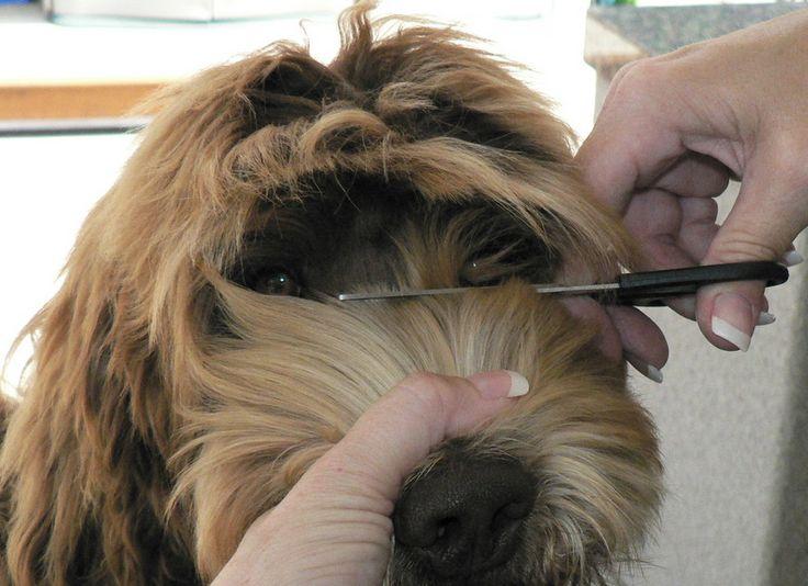Grooming Face on a Wavy Fleece Coat!