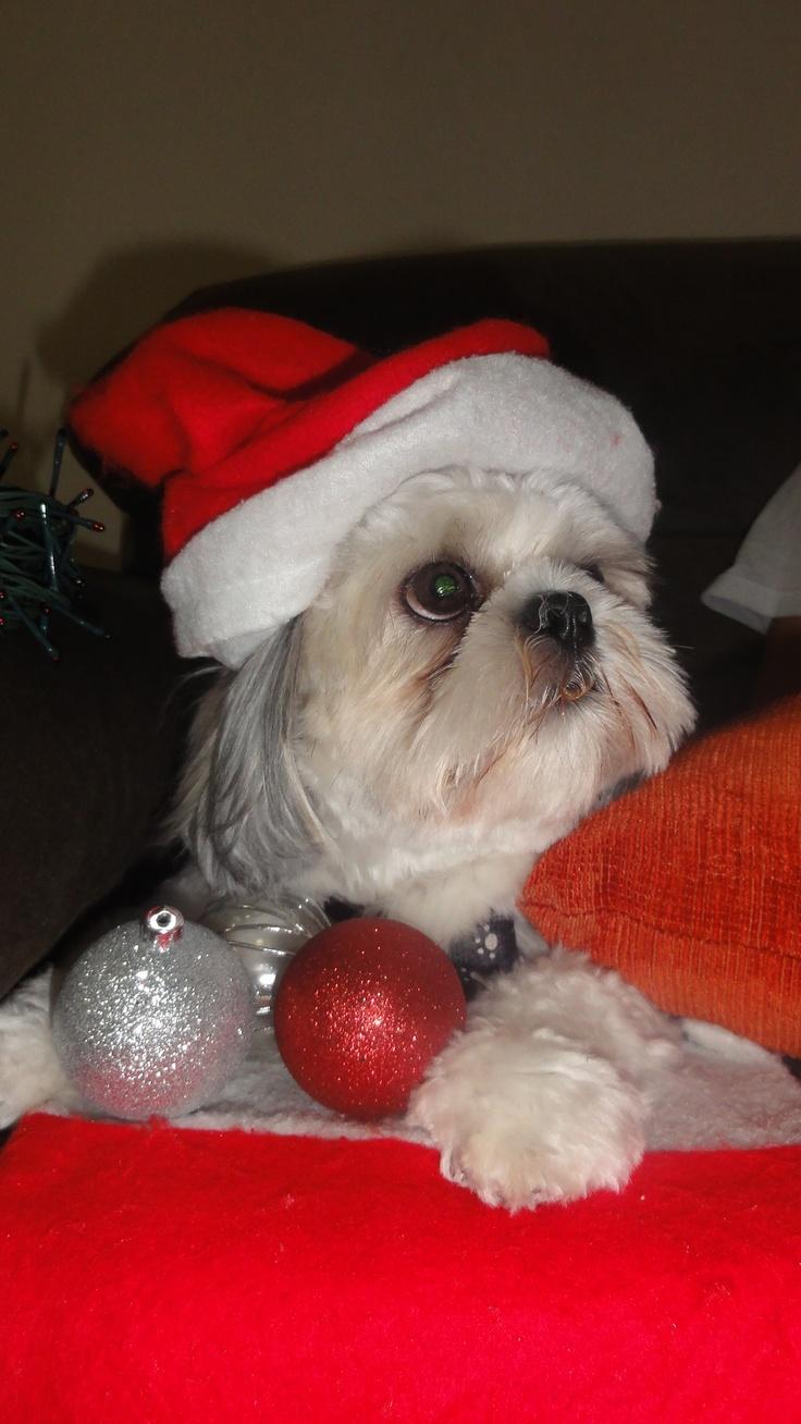 Meu fofo preparado para o Natal!!!