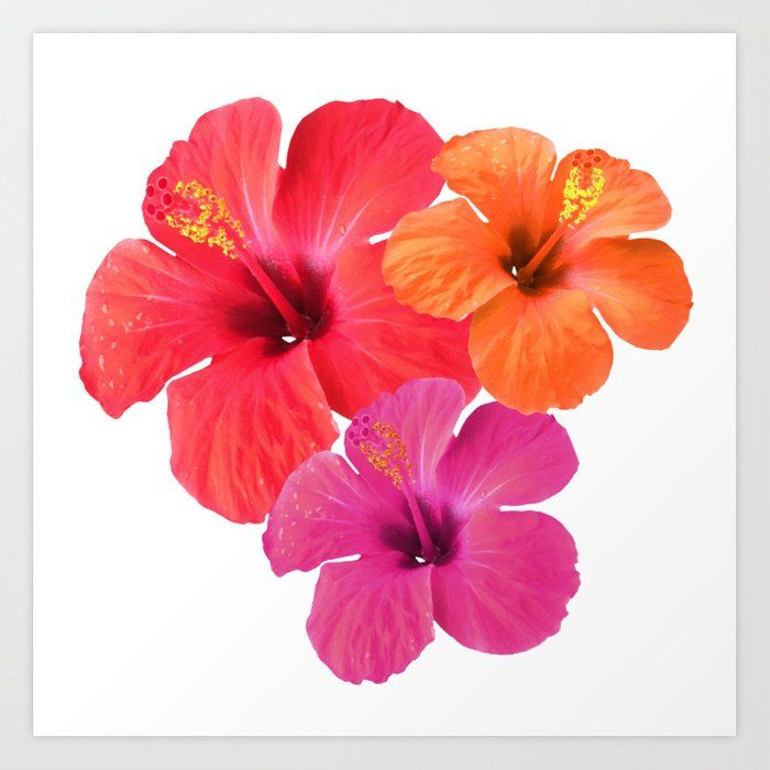 Hibiscus Flower Trio Art Print By Maree S Catharsis Society6 Com Society6 Flowers Hibiscus Blume Hibiskus Hibiskus Blumen Just For You