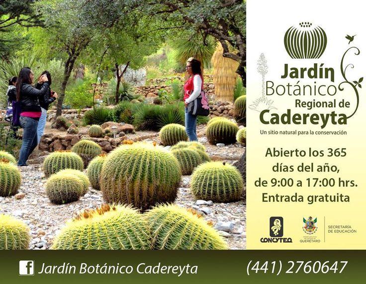 17 best images about jardines botanicos on pinterest for Botanico jardin