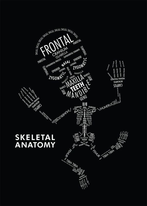 Horn (anatomy)