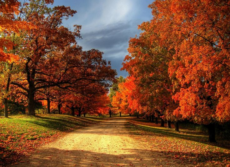 We Bring You 30 Wonderful Pictures Of Autumn Leaves And Autumn Wallpapers.  Enjoy This Incredible Photography.