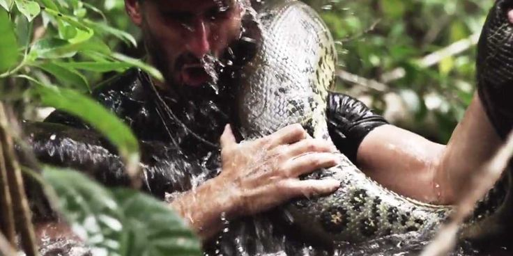 A New Discovery Channel Show Will Document A Man Being 'Eaten Alive' By An Anaconda