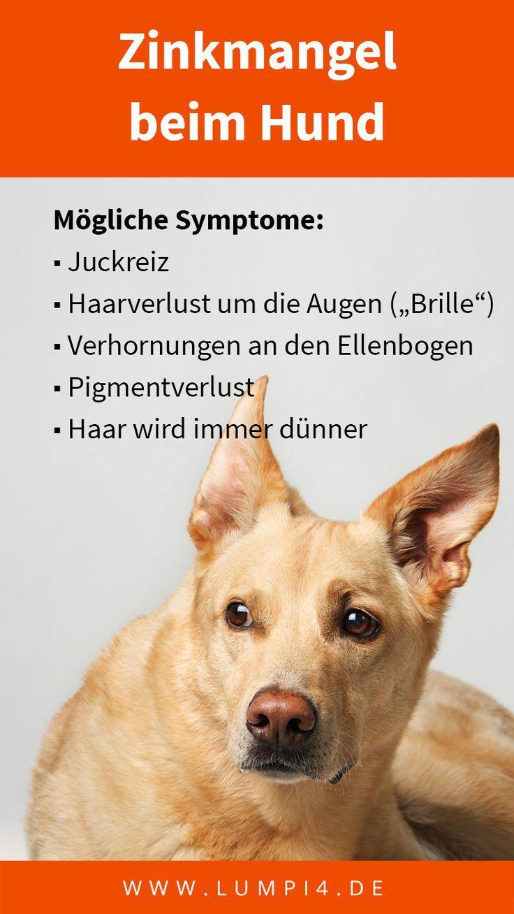Symptome Fur Zinkmangel Beim Hund Starkes Haaren Juckreiz