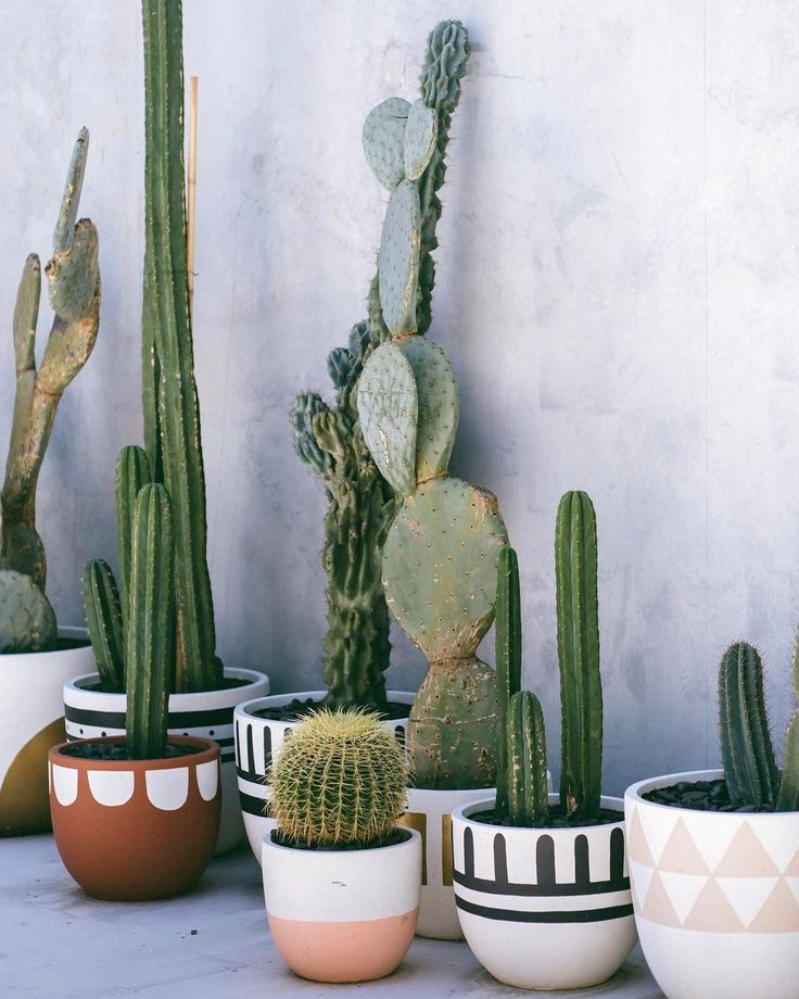 "2,535 Likes, 28 Comments - Poppy Lane (@popandscott) on Instagram: ""Our Byron store has just had a new load of cactus arrive ✨ photo by @lisa.sorgini"""