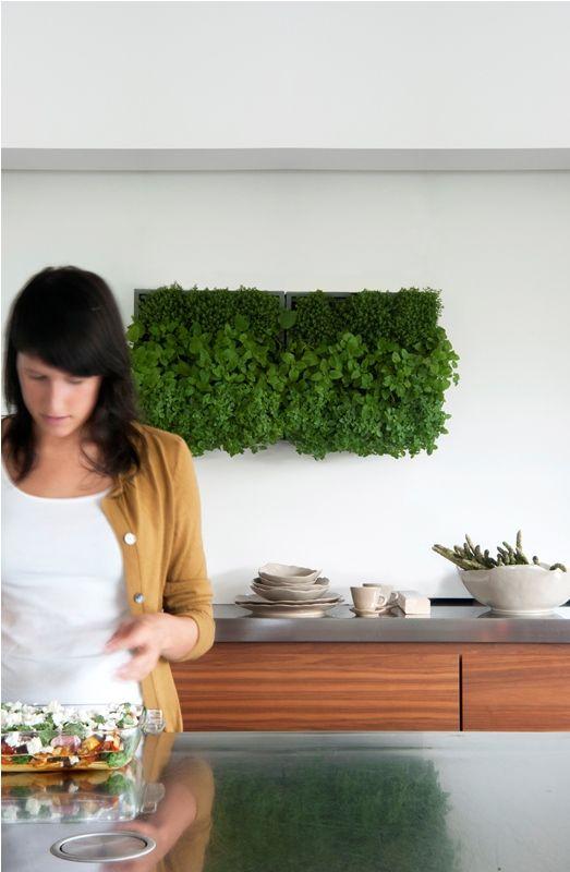 """Przykład wykorzystania KAROO do uprawy ziół w kuchni. Świeże i aromatyczne zioła zawsze pod ręką :) Zamawiać można na stronie internetowej http://zielonekaskady.pl/ w zakładce """"zamówienia""""."""