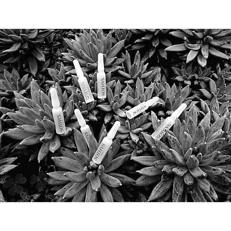 OXY ESSENTIAL AMPULLEN Sauerstoffspendende Ampullen für einen rosigen, frisch aussehenden Teint. Mit biotechnologischem Komplex aus Soja-Extrakt und Vitamin B 8 zur Optimierung der Hautzellfunktionen und gefässschützendem Hammamelis-Extrakt. #BeautyAndStyleHamburg #Klosterstern #Eppendorf #Hamburg #040 #Cosmetics #Sothys #SothysSkinCare #Ampoules