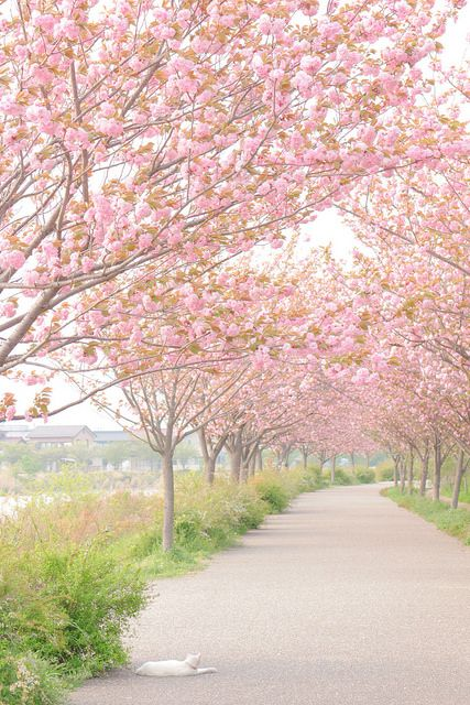 japan-overload:  戸田川緑地のねこ by poco33 on Flickr.