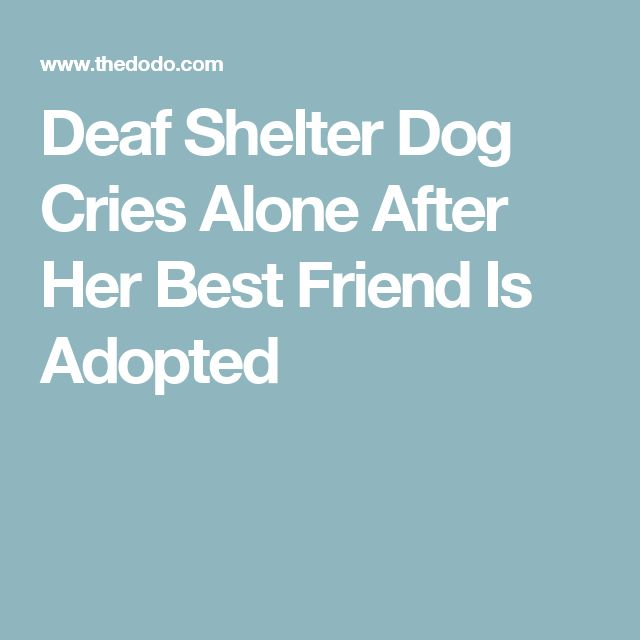 Deaf Shelter Dog Cries Alone After Her Best Friend Is Adopted