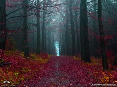 Autumn Woods, Germany. Photograph by Jonathan Manshack. http://photography.nationalgeographic.com/photography/photo-of-the-day/autumn-forest-germany/