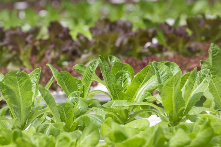 Hydroponics and Real Food Technology® solutions. #glyconutrition #mannaproducts #mannatechaustralasia