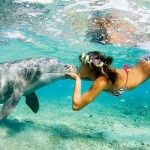 Swimming with the dolphins......