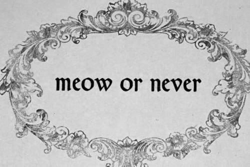 *Life Motto, Inspiration, Cat Meow, Funny Quotes, Cat Jokes, Things, Crazy Cat Lady, Kitty, Cat Lovers