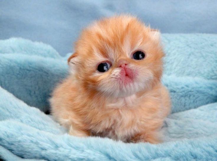 Baby Animals 13
