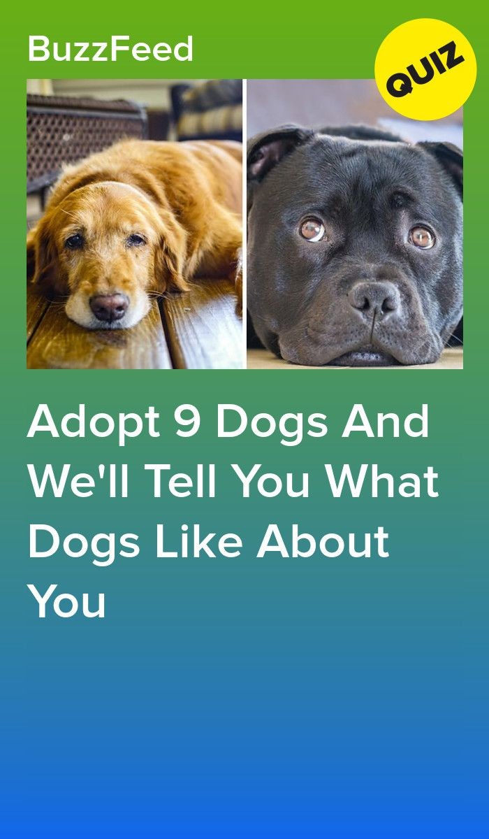 Adopt 9 Dogs And We Ll Tell You What Dogs Like About You Interesting Quizzes Dog Quizzes Dog Quiz