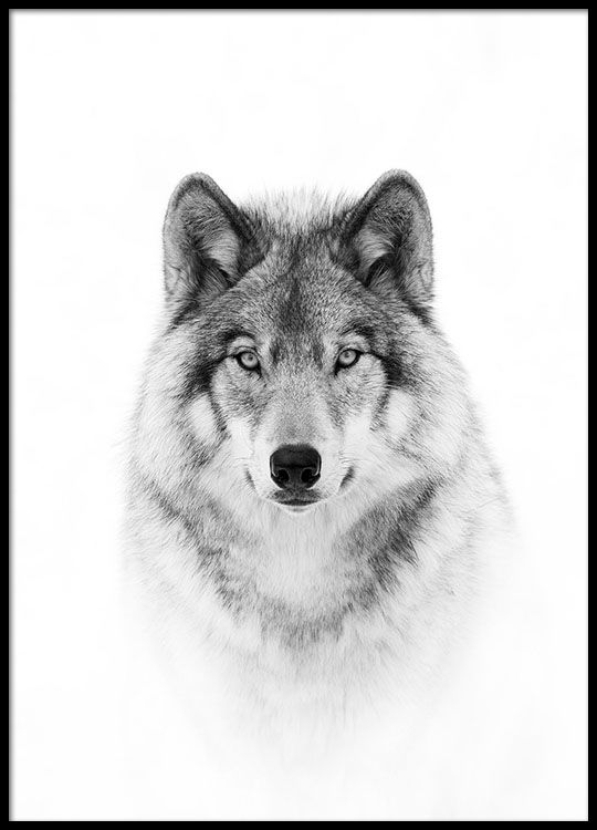 Wolf poster in der Gruppe Poster / Fotografien bei Desenio AB (8693)