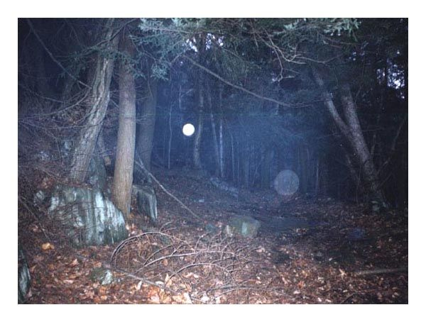 10 Most Haunted Forests on Earth ... Nothing is left of Connecticut's Dudleytown but a few cellar holes, rambling stone fences, and the foundations of what was once a small community. The town, settled in the mid-1700s by the Dudley brothers, is supposedly cursed.