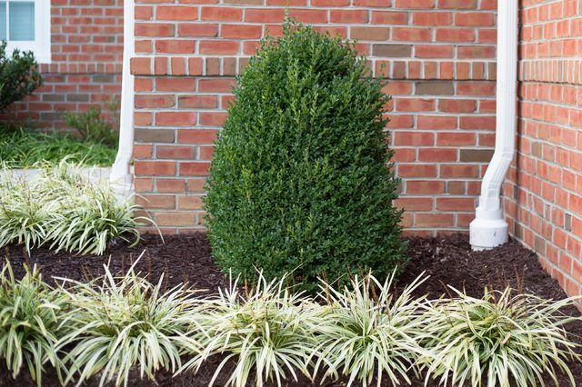 Types of Boxwood Plants | eHow