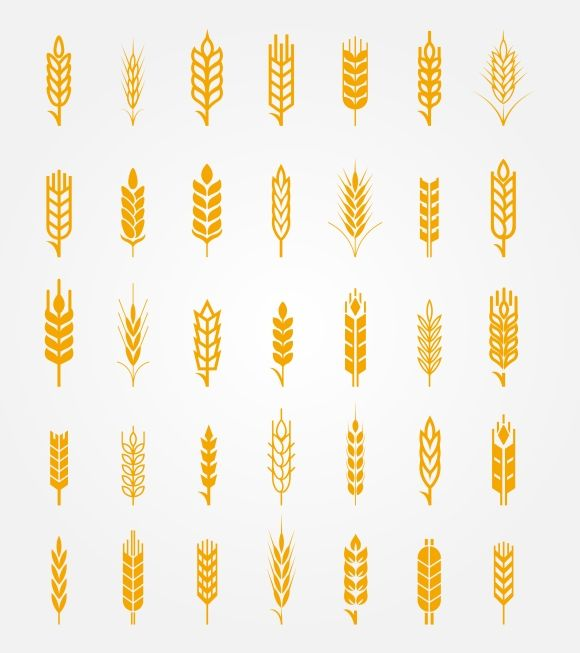 Vector wheat ears icons set - Graphics - 1