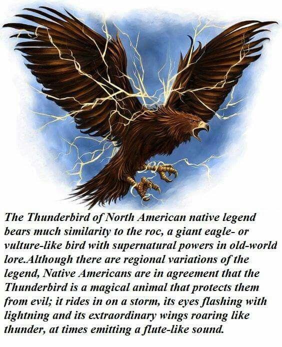 Thunderbird cryptozoology  Wikipedia
