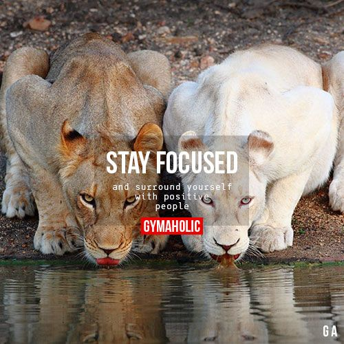 """gymaaholic: """" Stay Focused And surround yourself with positive people. http://www.gymaholic.co """""""