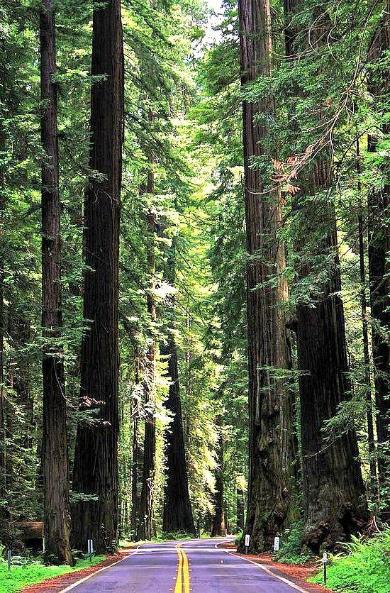 Redwood National Park, California - See more California inspiration here: http://www.ytravelblog.com/travel-pinspiration-california/