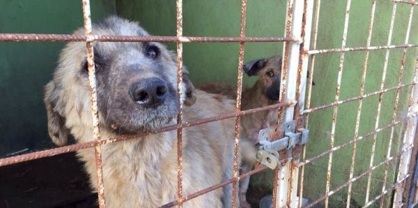 Petition: City Hall Mangalia (Romania): an end to the killing and torture of dogs in the Public Shelter Mangalia !!!