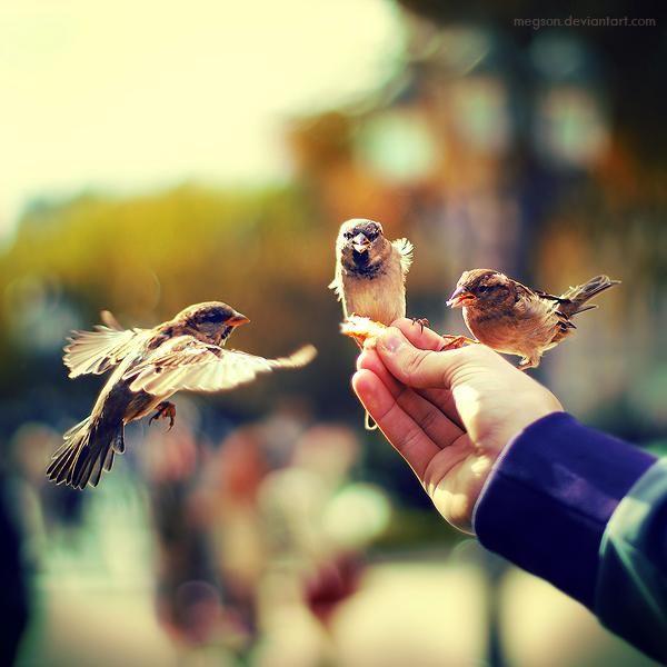 GentleMary Poppins, Friends, Inspiration, Hands, Sparrows, Three Little Birds, Adobe Photoshop, Photography, Animal