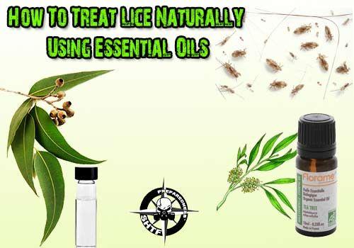 How To Treat Lice Naturally Using Essential Oils - SHTF Preparedness