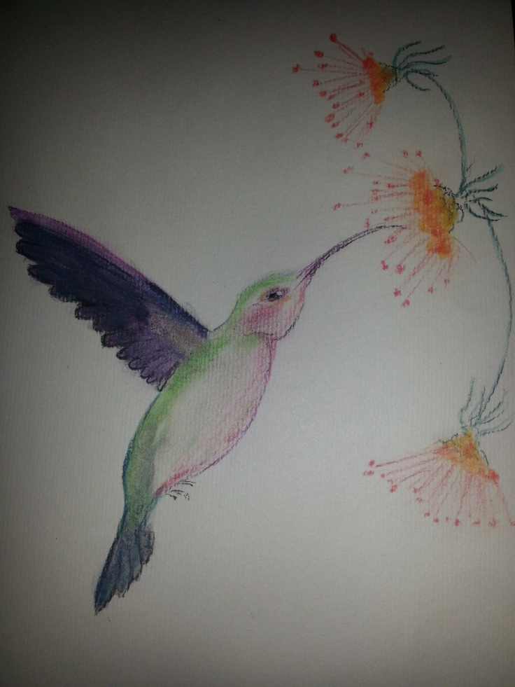 Humming bird in pastels