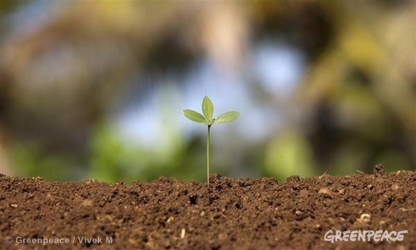 Bhutan goes organic: a lesson for us all? organic farming Greenpeace / Vivek M