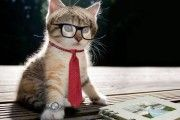 cat_studyng_for-exam_whatsapp-dp