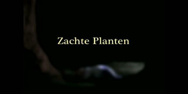 "Emma De Swaef ""Zachte Planten"" by LUCA, campus Sint-Lukas Brussel"