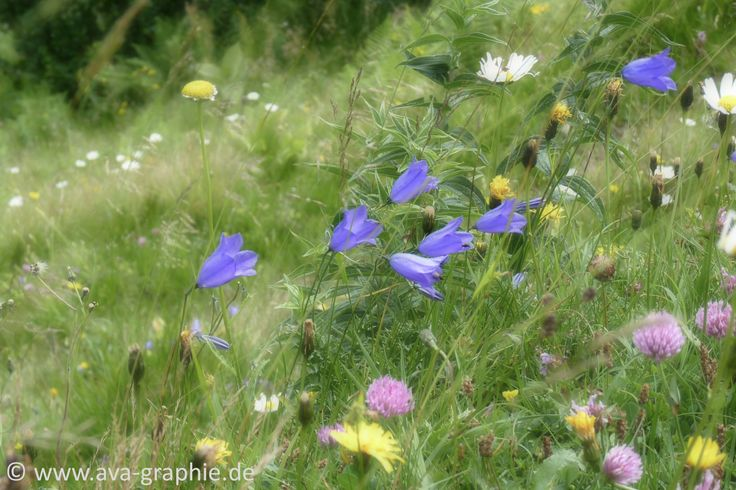 Wild Flowers in the Bavarian Mountains