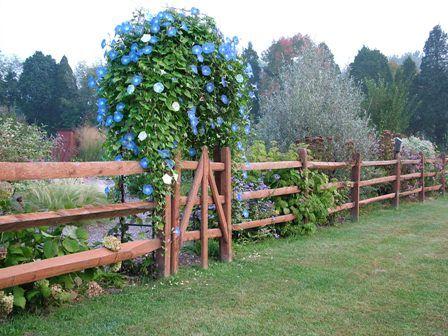 Google Image Result for http://www.gardeninggonewild.com/wp-content/uploads/2007/12/side-garden-rail-fence-sept-27-07.JPG