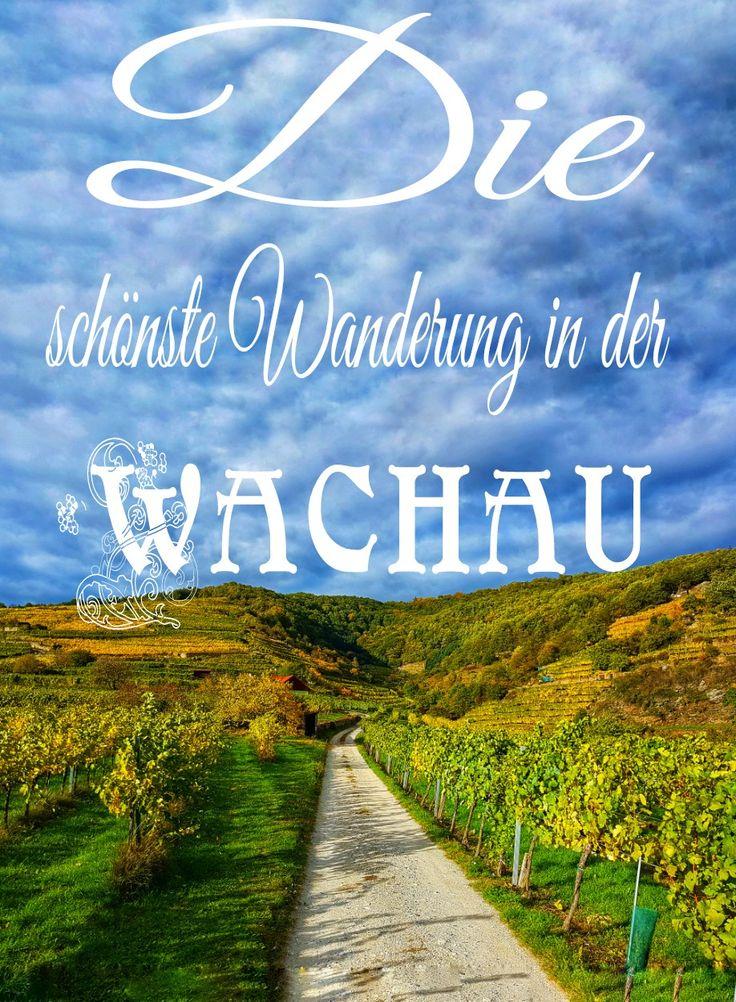 Auf meinem Blog verrate ich dir die schönste Wanderung durch die schöne Wachau in Österreich! Traumhafte Ausblicke inkludiert + TOP Heurigen Empfehlung!